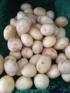 Tancred_potatoes